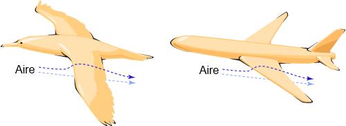 bird_plane_compare