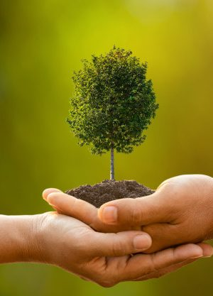 hand-two-people-holding-tree-soil-outdoor-sunlight-green-blur-planting-tree-save-world-growing-environment-concept_30478-5444