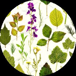 herbarium icon