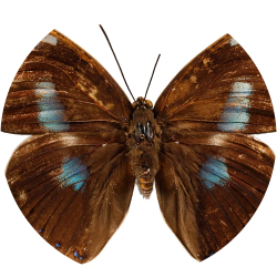 invertebrado icon